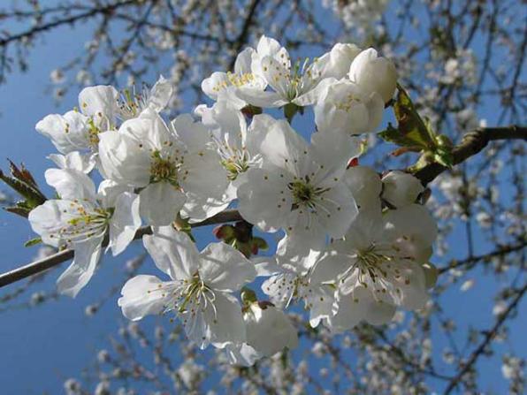 Offenburg/Baden: Frühjahr 11.04.2009 in der Waldbachsenke