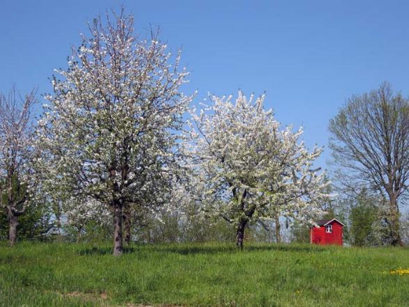Frühlings Spaziergang Waldbachsenke Zellweierbach